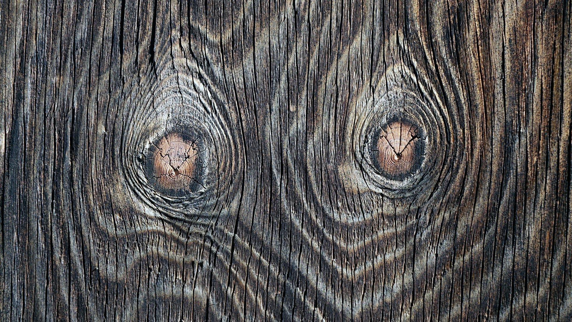 1000 Antworten Gibt Es Bäume Ohne Jahresringe?   Umwelt innen Wie Entstehen Jahresringe Bei Bäumen