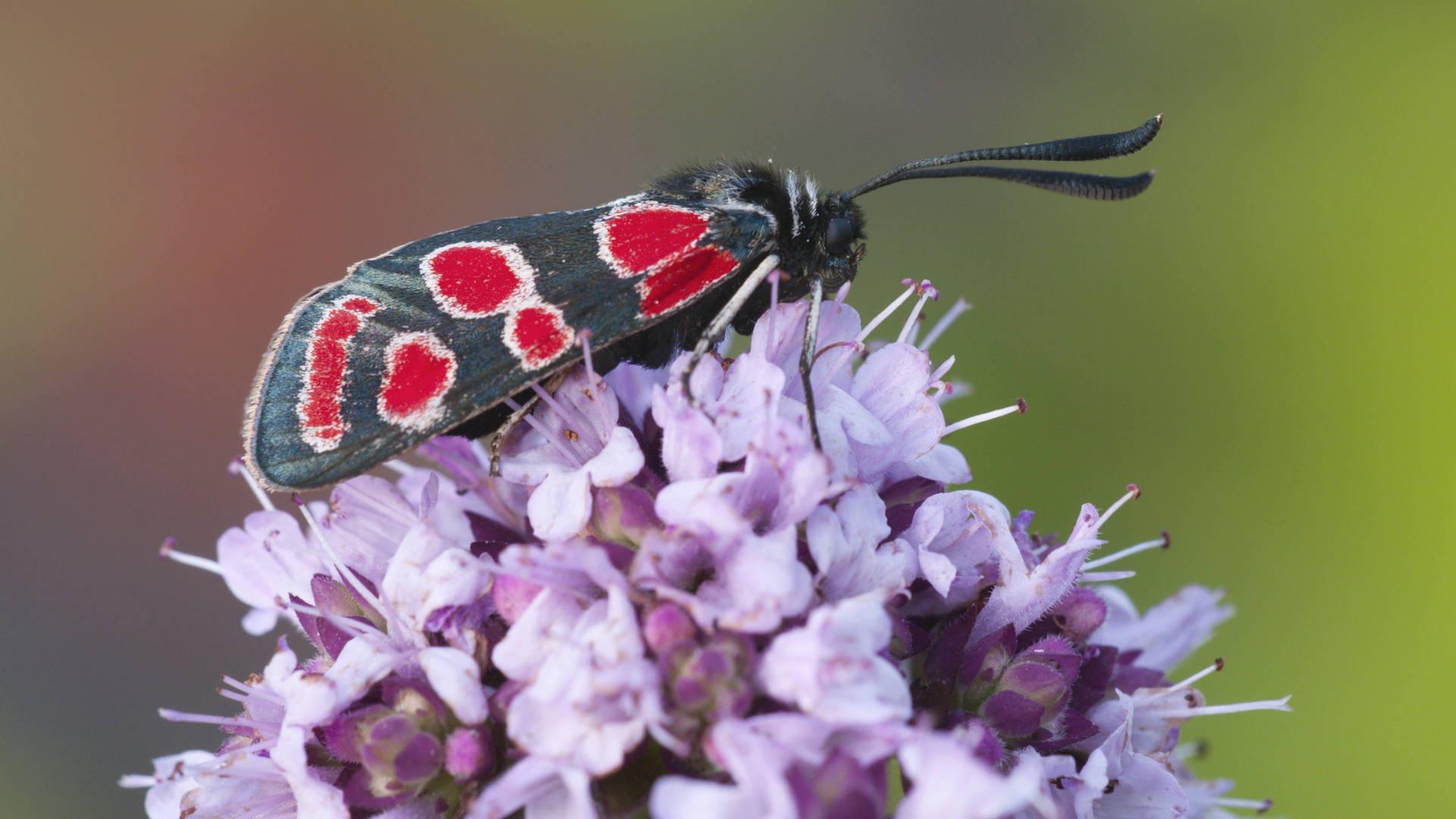 1000 Antworten Wo Schlafen Schmetterlinge? | Umwelt & Natur in Schmetterlinge Insekten