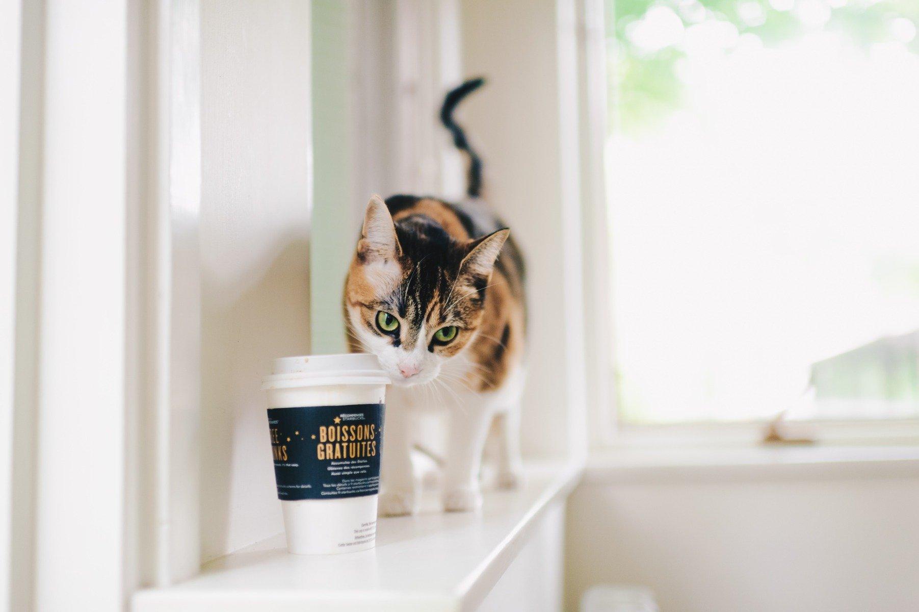 12 Giftige Lebensmittel Für Katzen ➨ Gefahr Für Katzen verwandt mit Was Passiert Wenn Katzen Alkohol Trinken