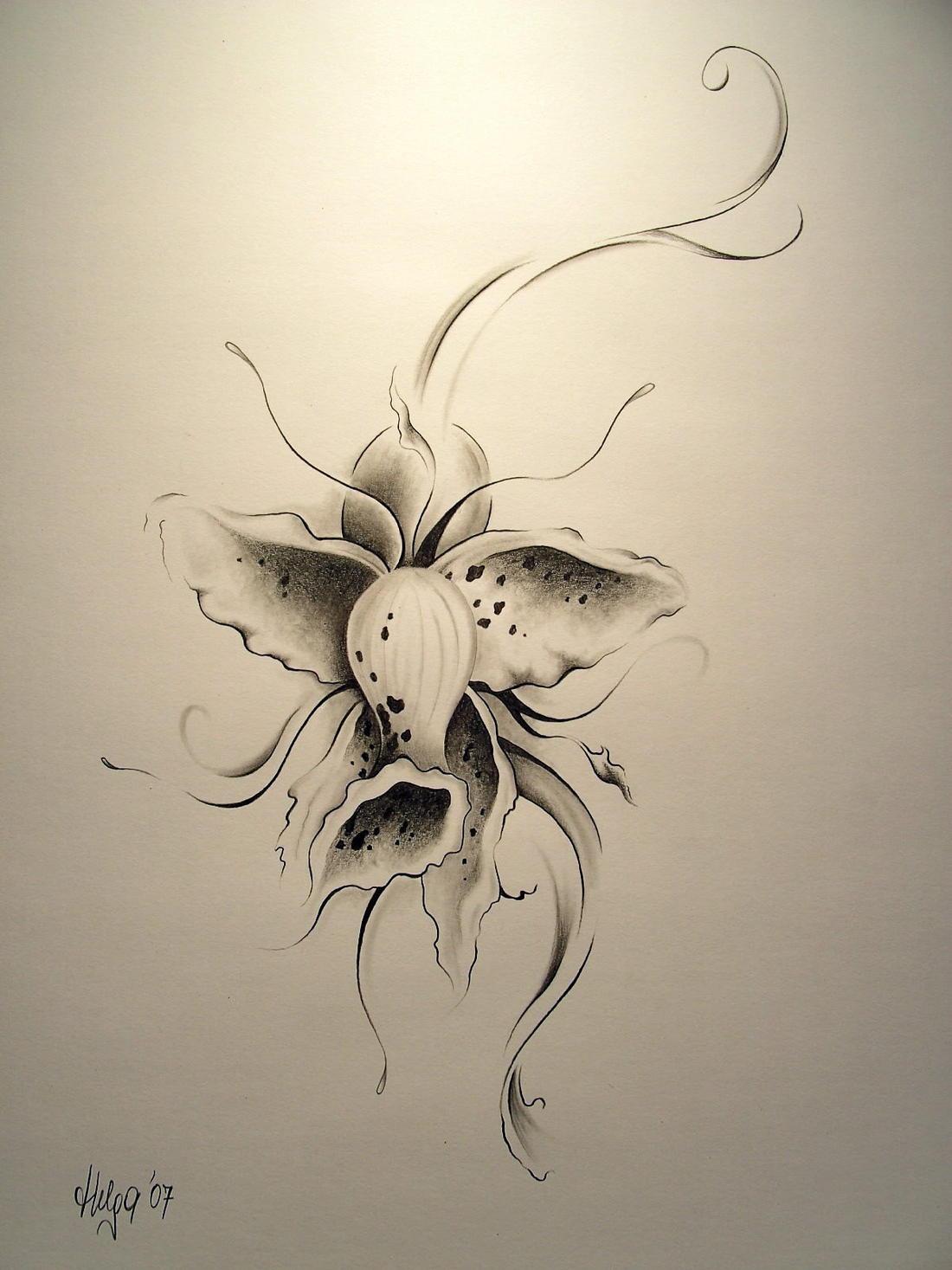 260+ Bleistiftzeichnung Blumen-Bilder Und Ideen Auf Kunstnet über Bleistiftzeichnungen Blumen