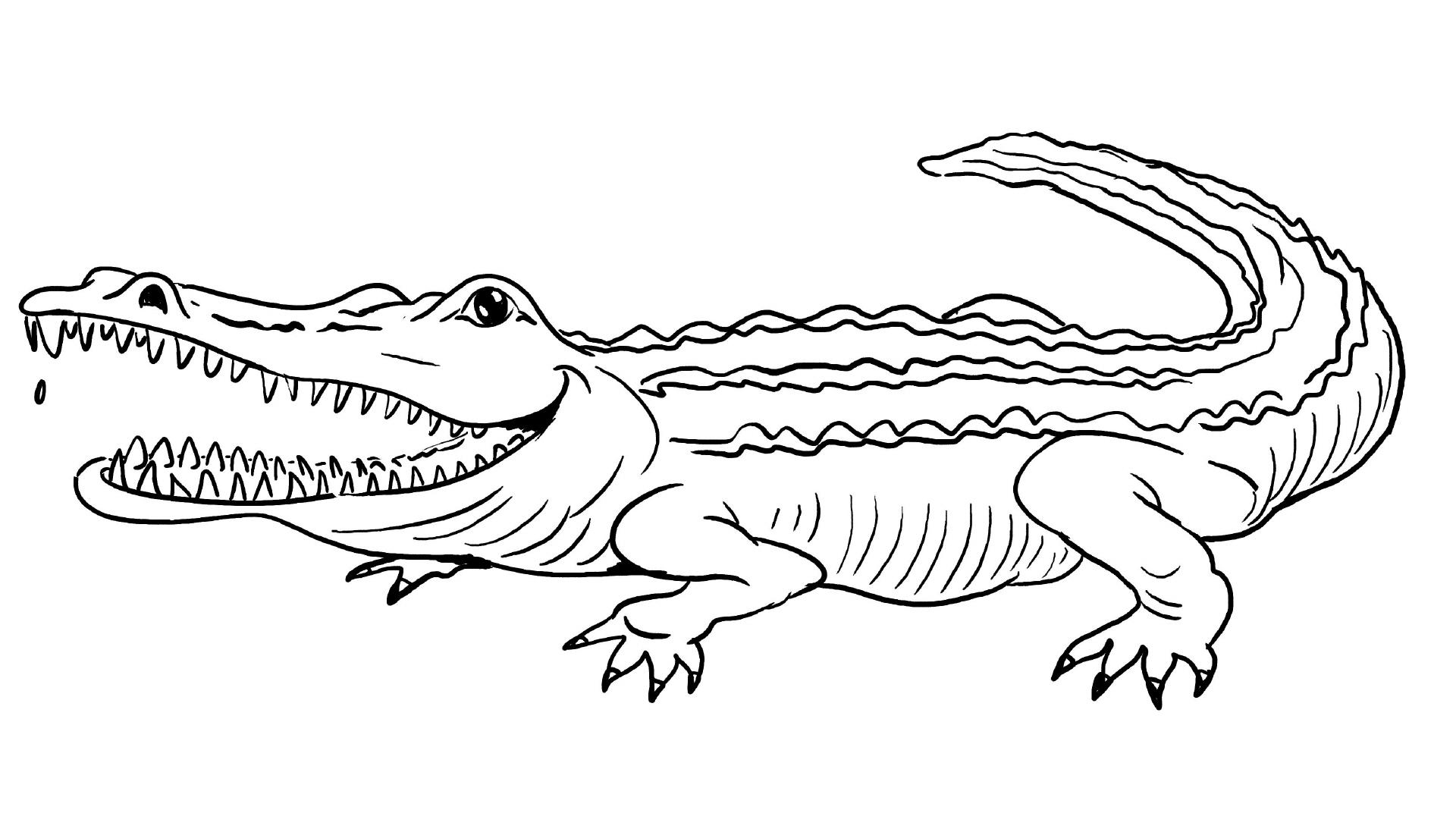 30 Krokodil Bilder Zum Ausmalen - Besten Bilder Von Ausmalbilder mit Krokodil Zum Ausmalen