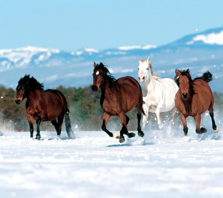 4 Pferde Hintergründe - Kostenlos Herunterladen für Pferde Bilder Kostenlos Herunterladen