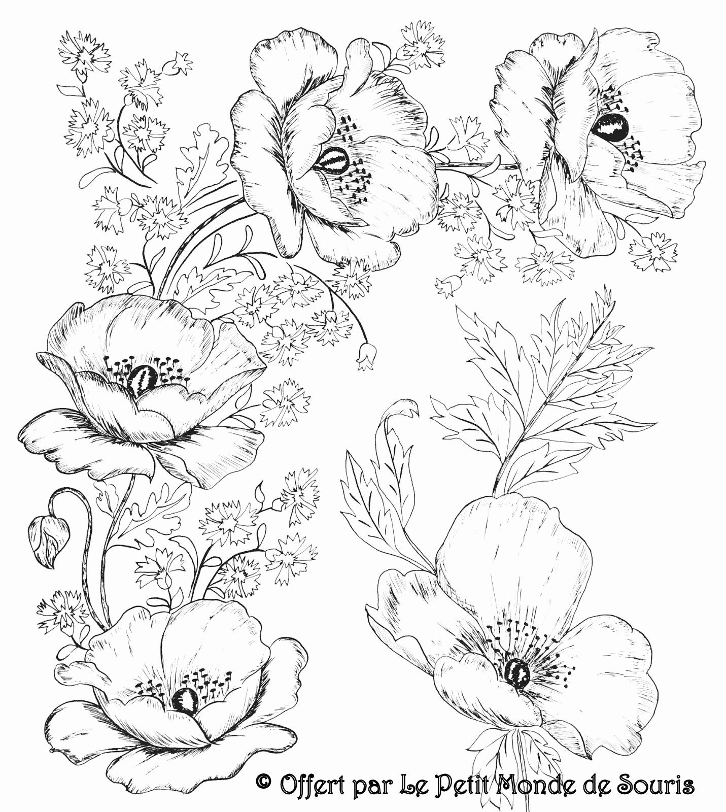 41 Neu Bild Von Blumenbilder Zum Ausmalen | Lecrachin mit Blumenbilder Zum Ausmalen