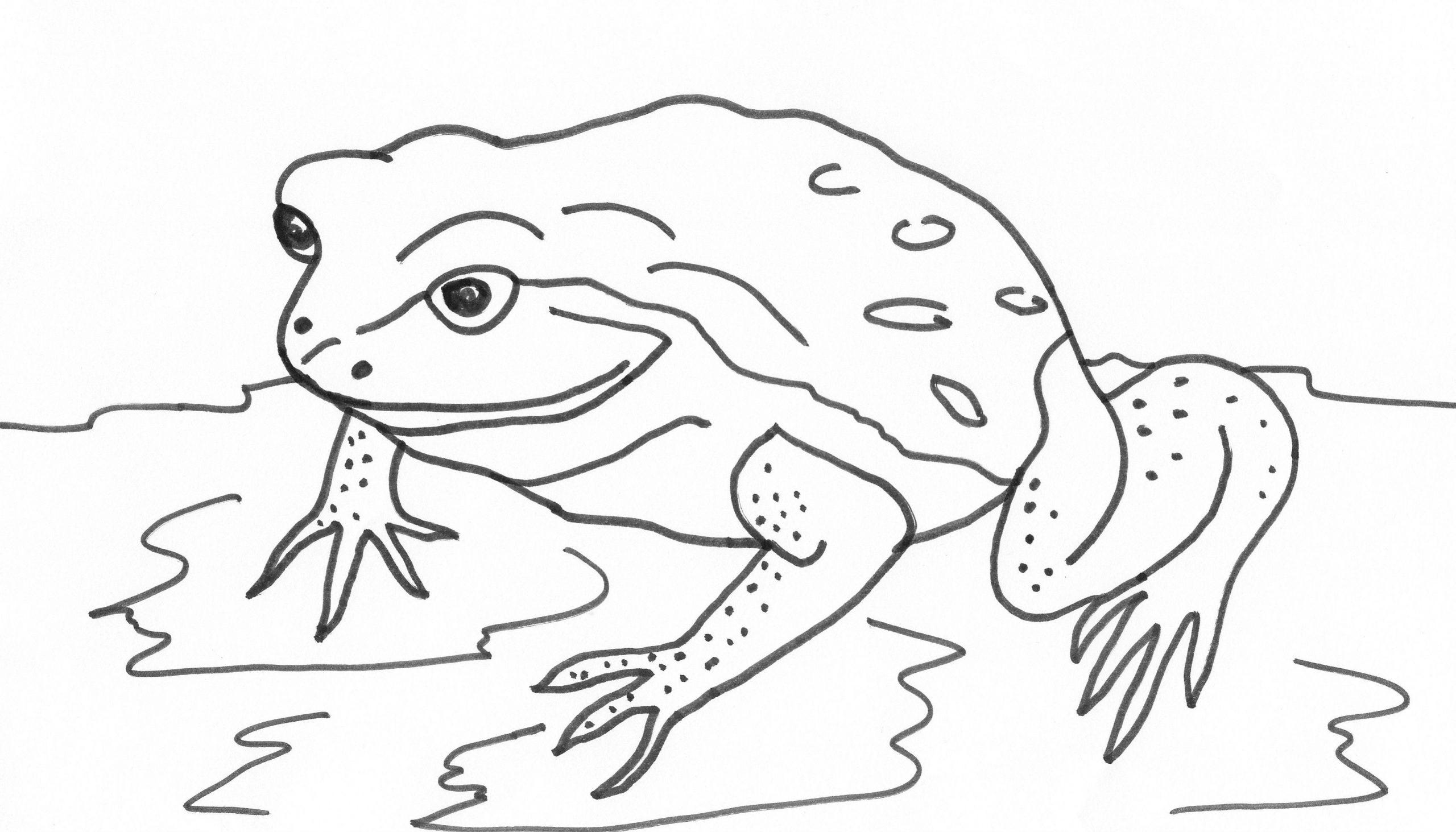 frosch malvorlage  kinderbilderdownload  kinderbilder