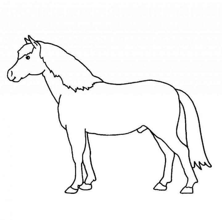 malvorlage pferdekopf einfach | coloring and malvorlagan