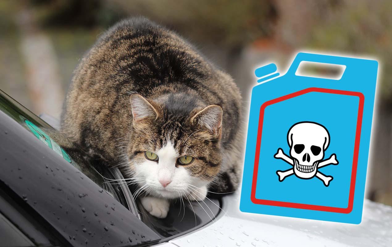 Achtung Lebensgefahr: Frostschutzmittel Sind Ein Großes verwandt mit Was Passiert Wenn Katzen Alkohol Trinken