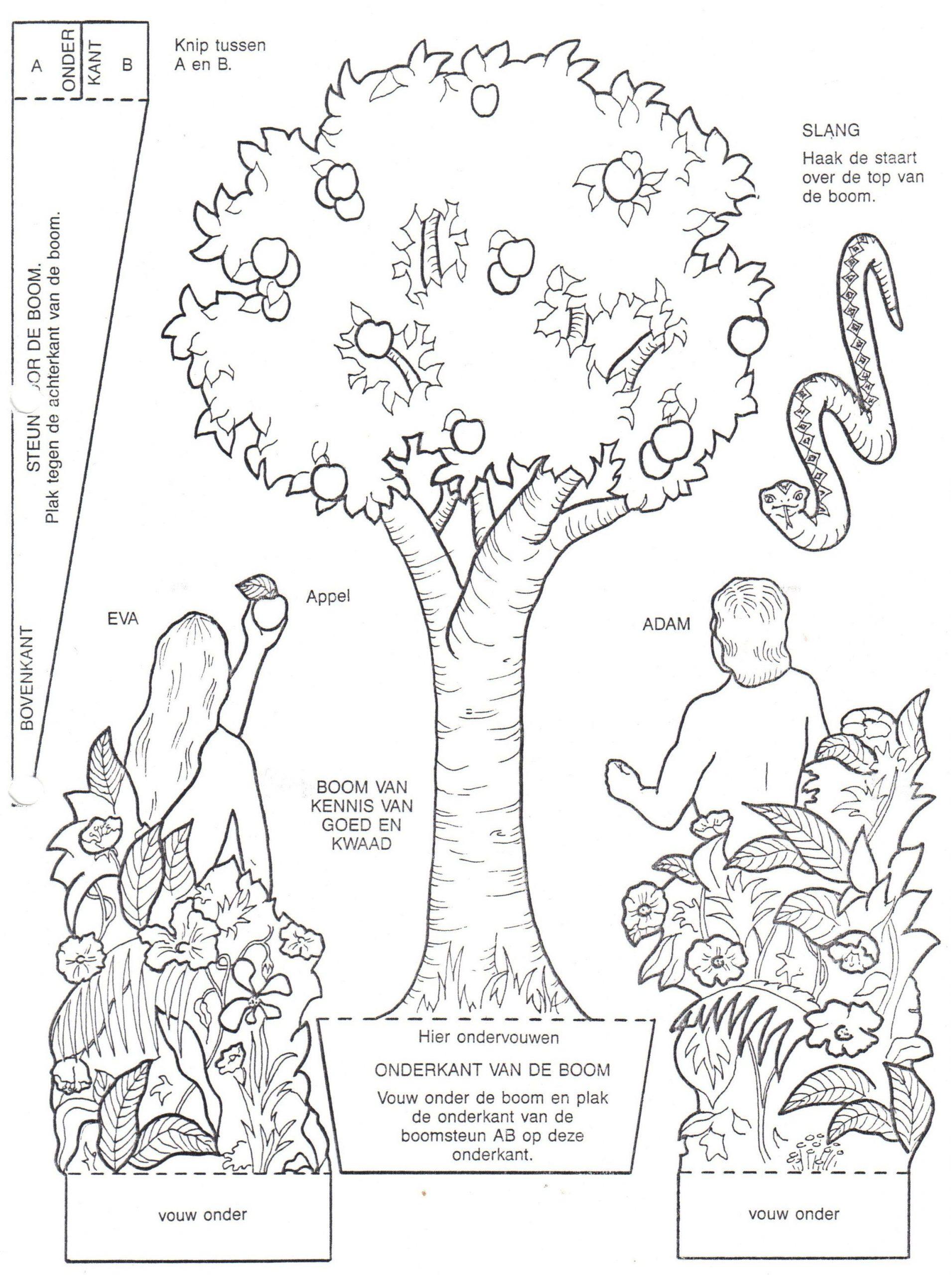 Adán Y Eva (Mit Bildern) | Adam Und Eva, Bibel Malvorlagen mit Malvorlage Adam Und Eva