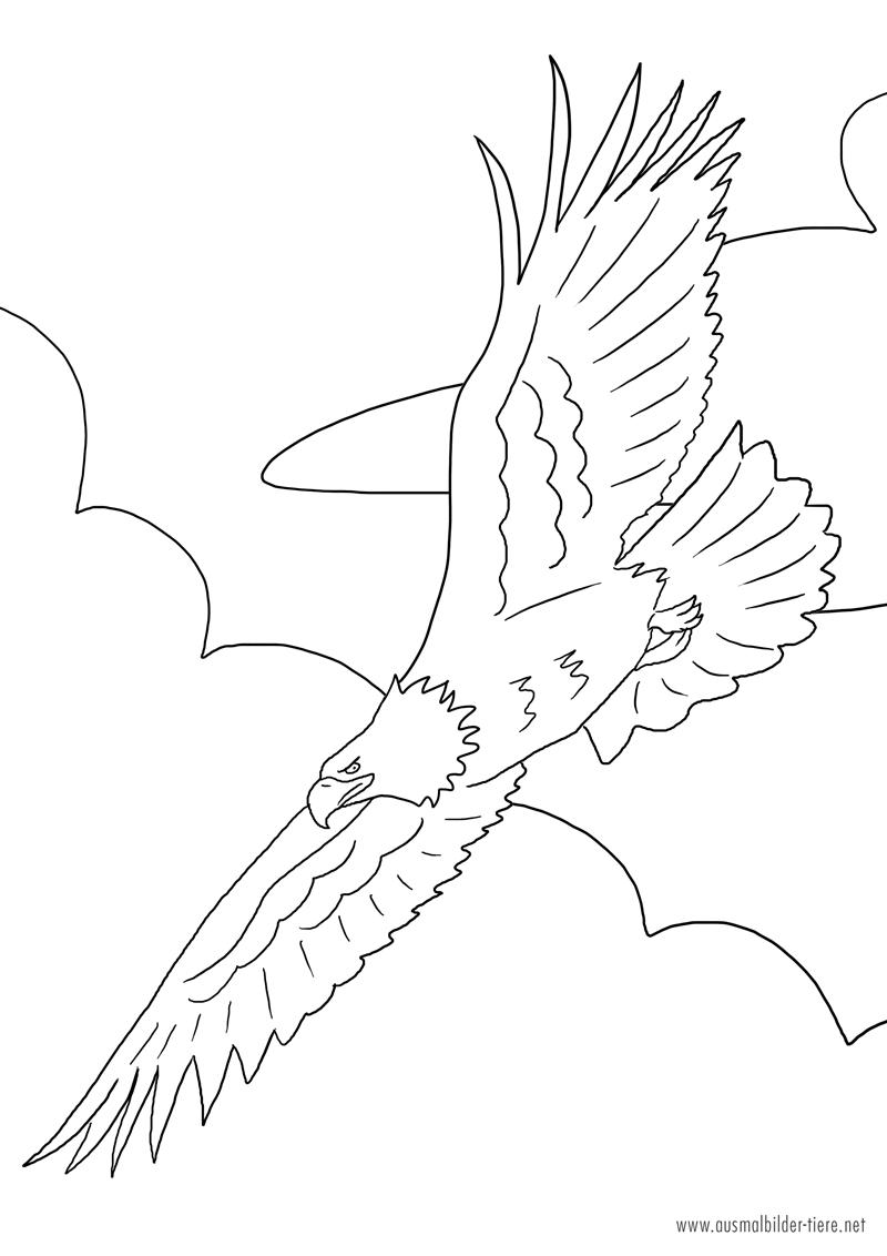 Adler Zum Ausmalen | Ausmalbilder Pferde - Viele Malvorlagen bei Ausmalbilder Adler