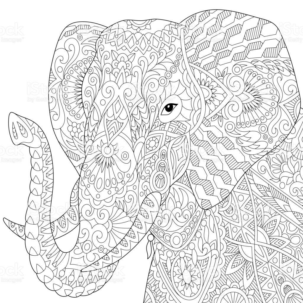 African Or Indian Elephant, Isolated On White Background für Elefanten Malvorlagen