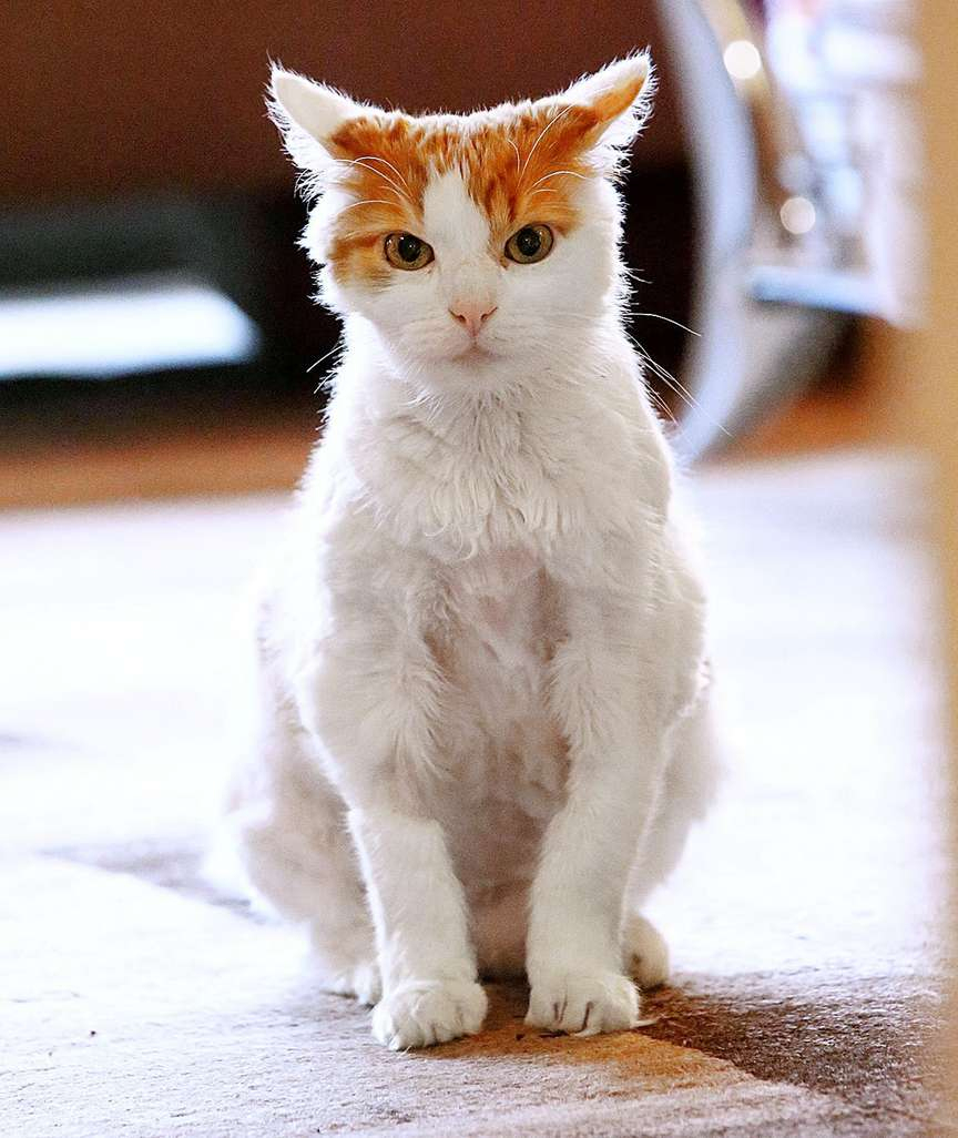 Alkoholvergiftung: Katze Mit Kater In Klinik! - News Inland für Was Passiert Wenn Katzen Alkohol Trinken