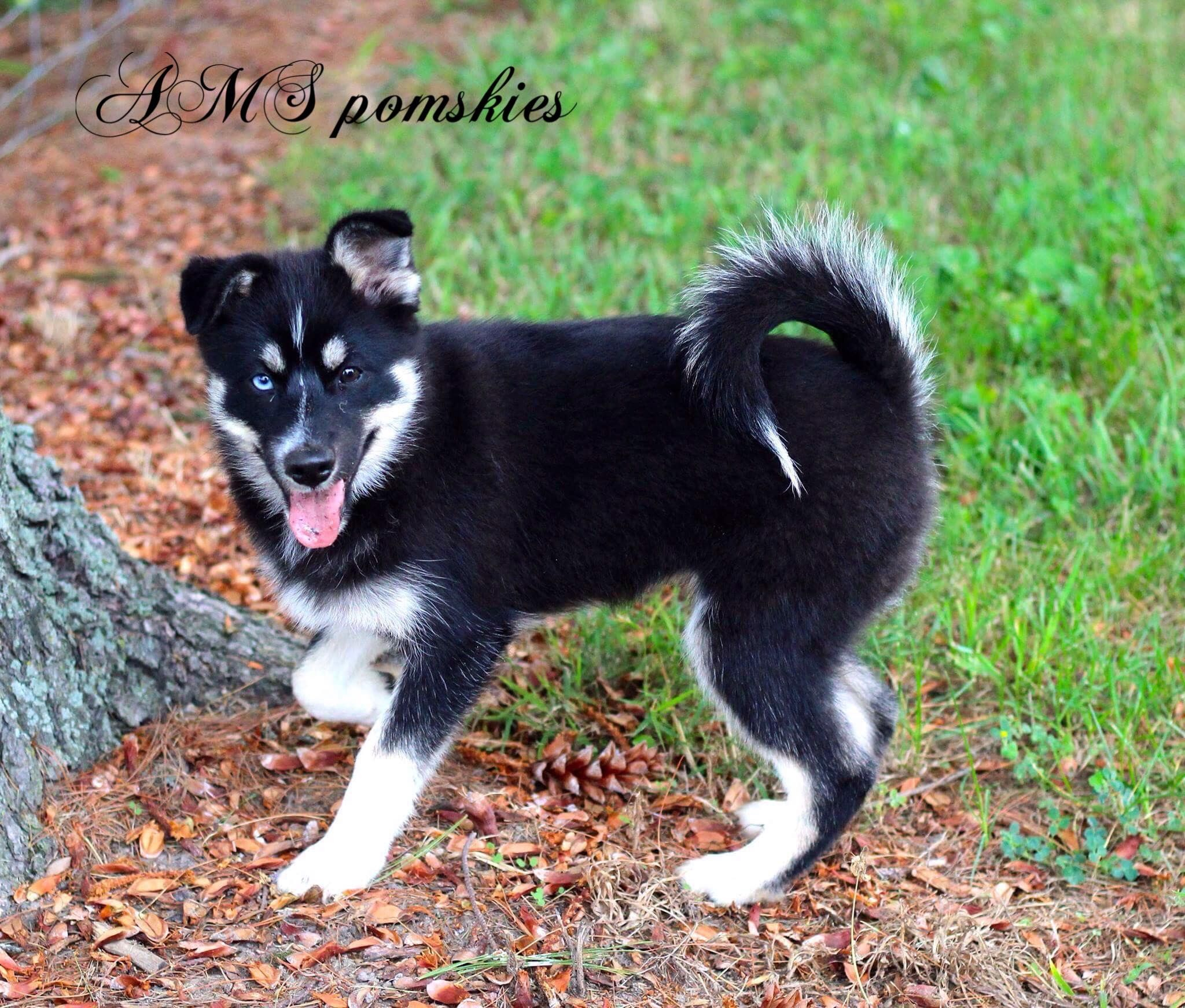 Alle Kleinen Hunderassen Der Welt   Bilder Und Sprüche Für innen Hunderasse 7 Buchstaben