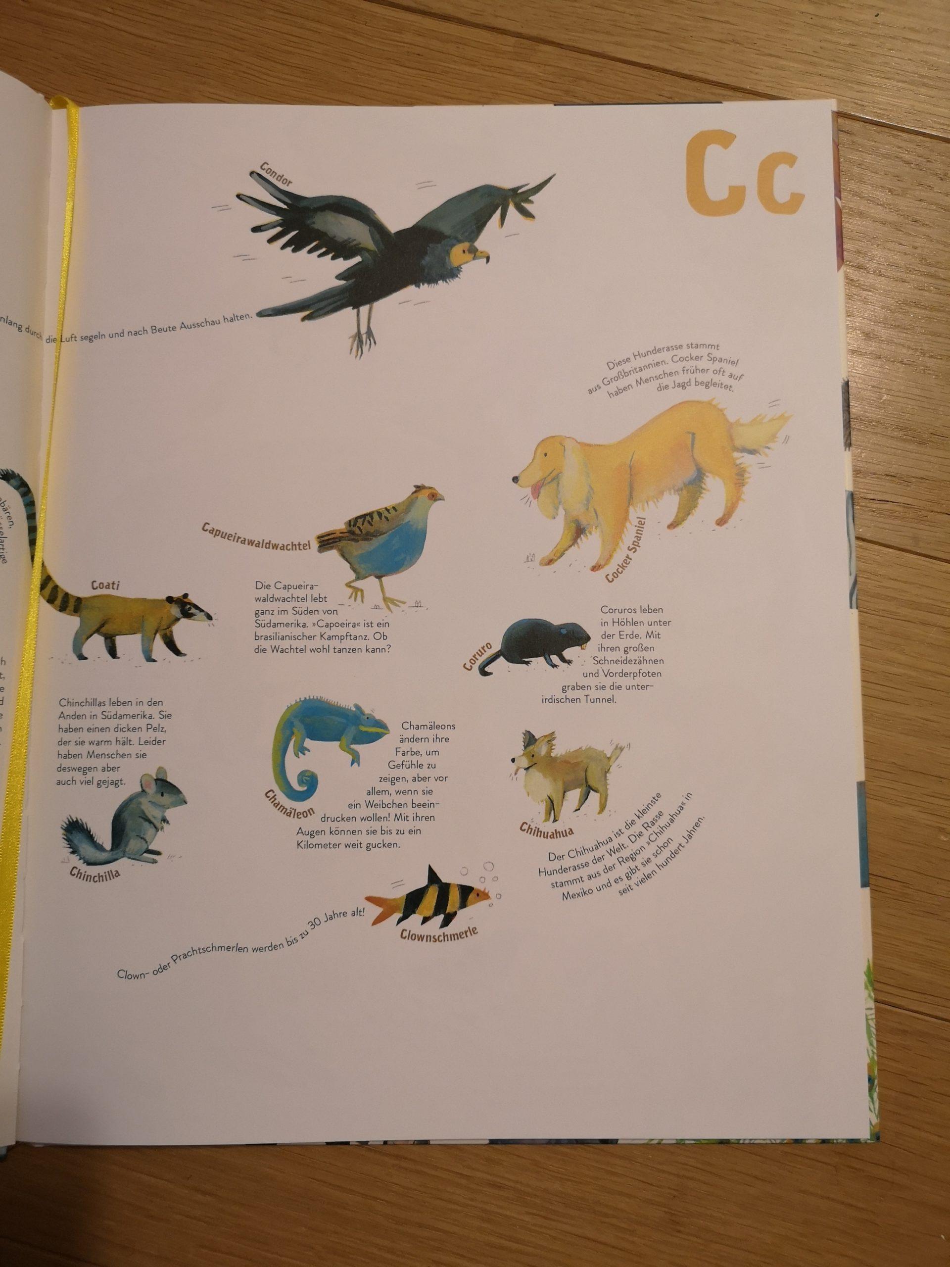 Alle Tiere, Die Ich (Noch Nicht) Kenne - Buchkinderblog verwandt mit Tier Mit C Als Anfangsbuchstabe