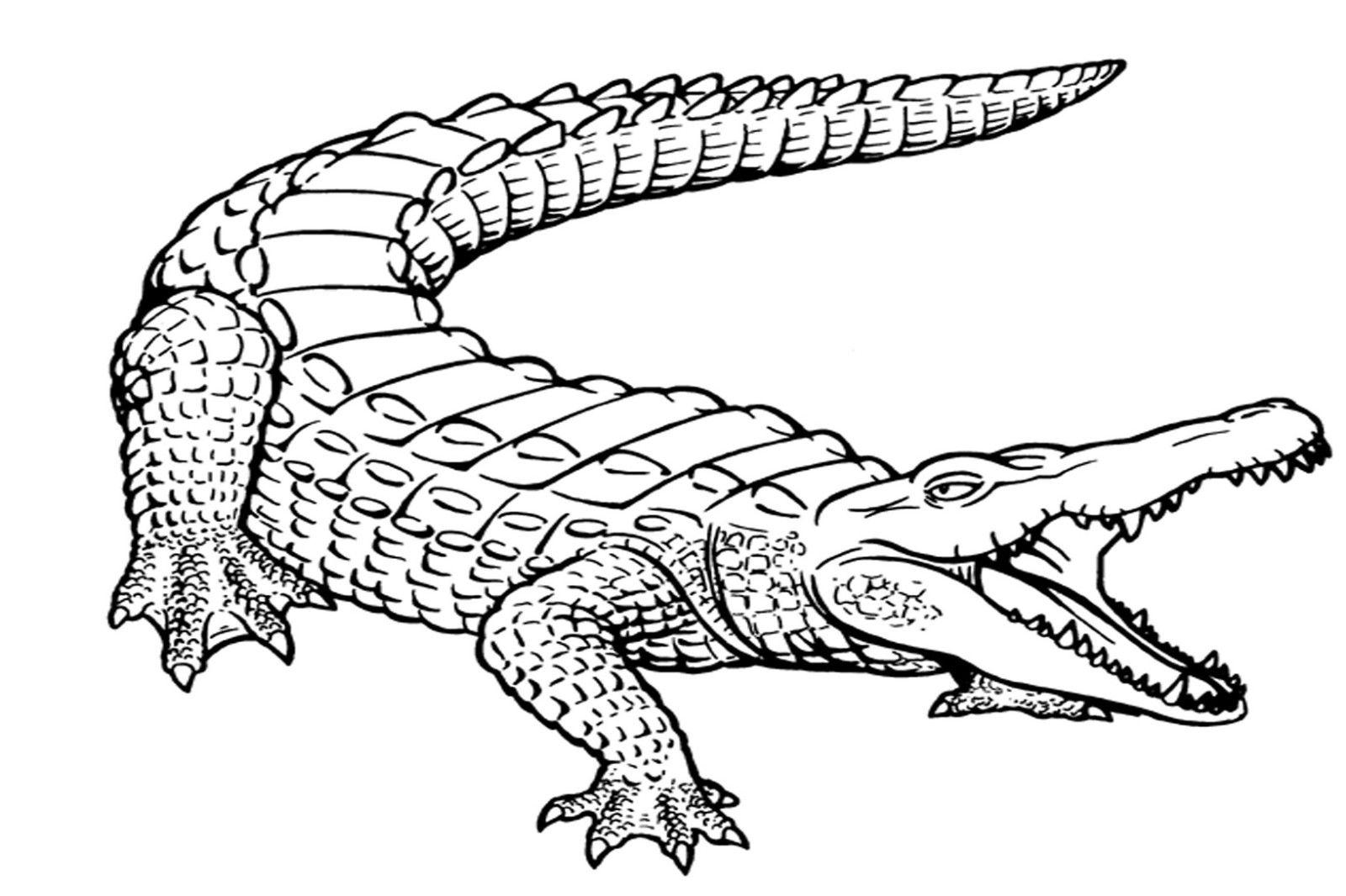 Alligator Coloring Pages | Cocodrilo Dibujo, Tatuaje De mit Krokodil Zum Ausmalen