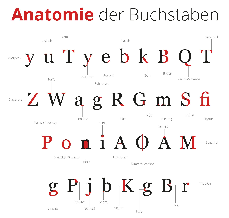 Anatomie Der Buchstaben: Alles Auf Einem Blick (Mit Bildern ganzes Bilder Aus Buchstaben