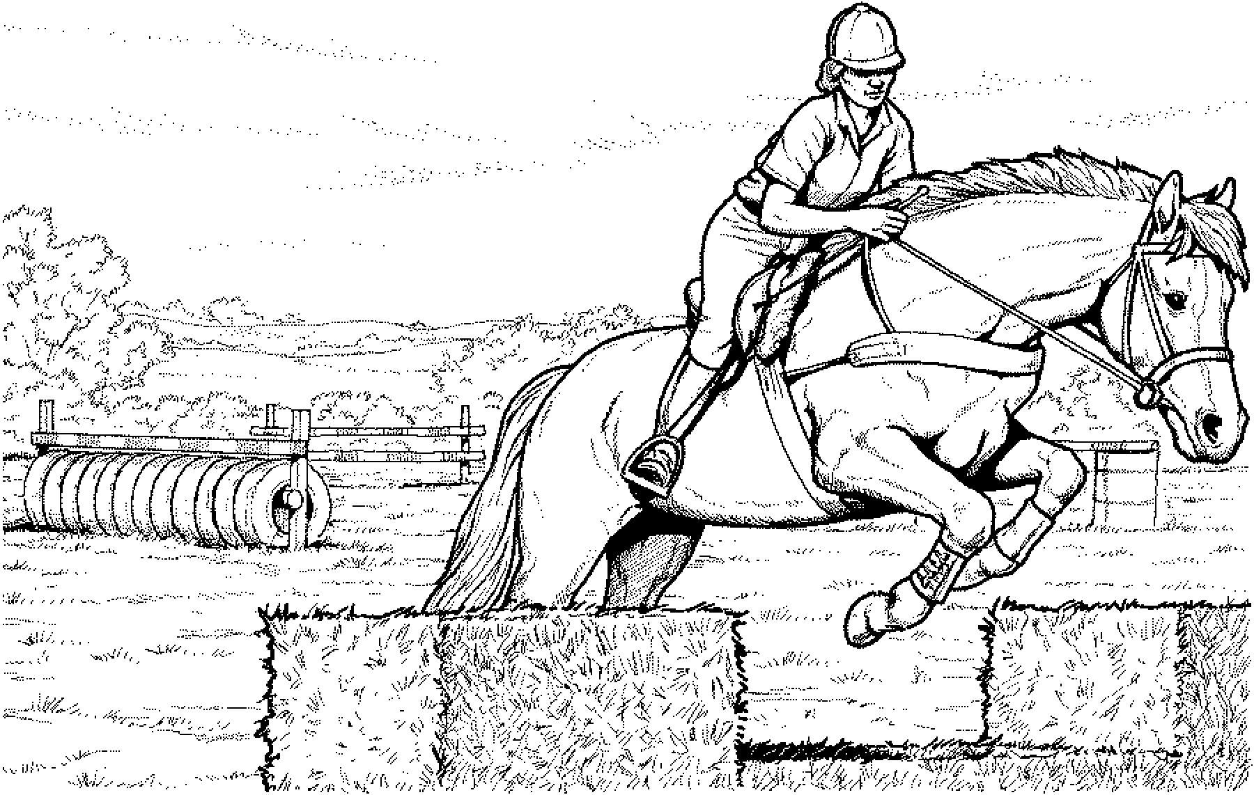 pferde bilder zum ausmalen und ausdrucken  kinderbilder