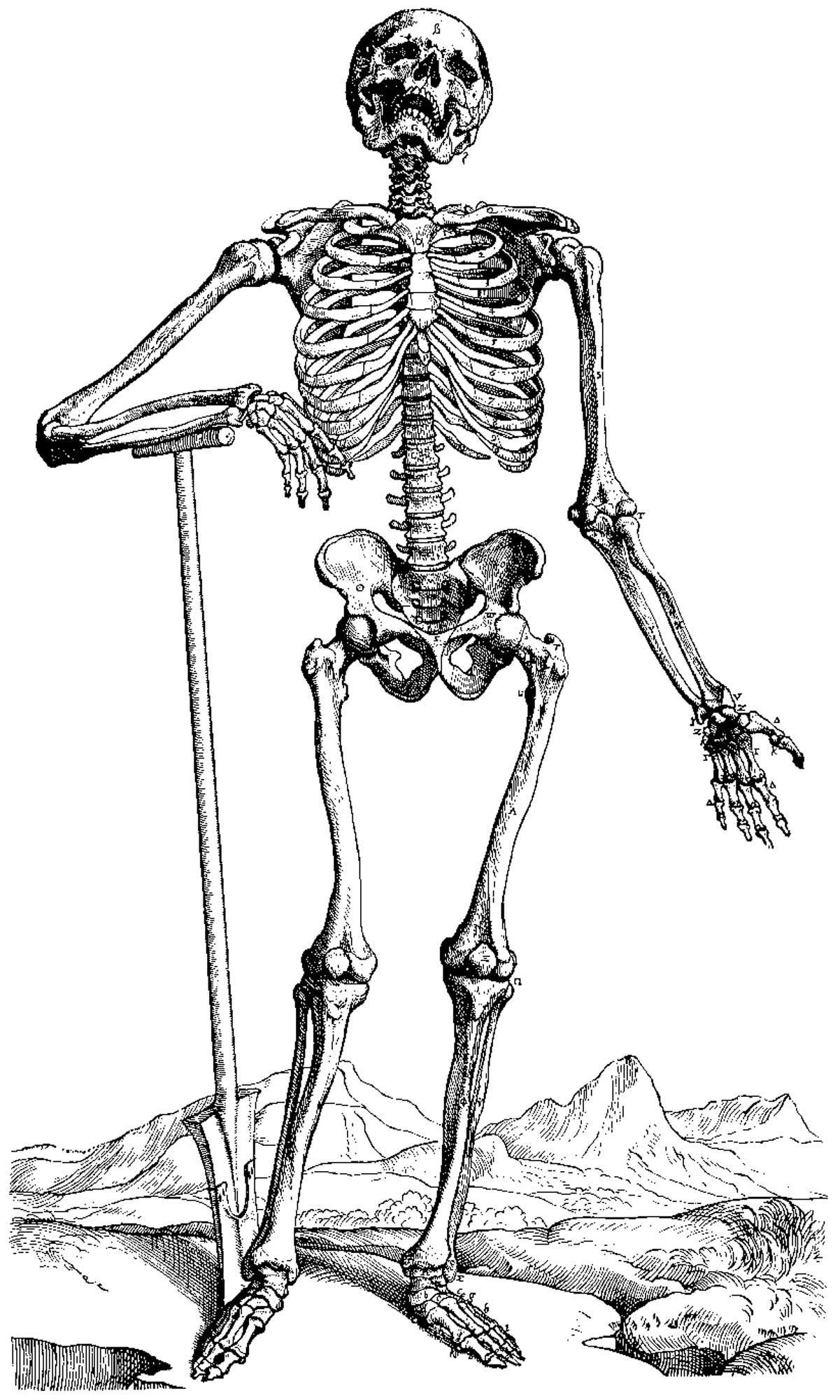 Animal Skeleton Images | Animal Skeleton Colouring Pages ganzes Skelett Ausdrucken
