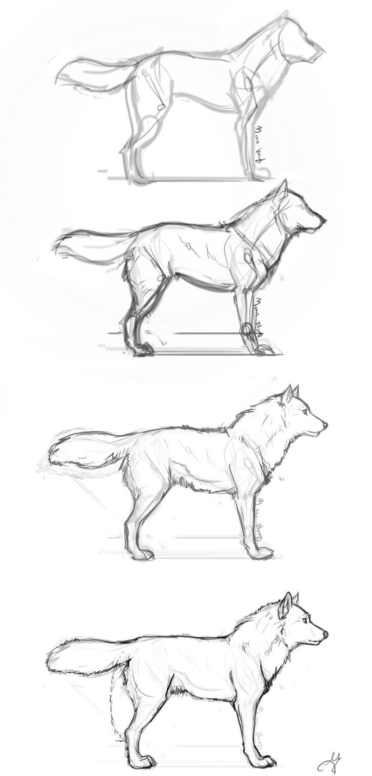 Anleitungen Zum Zeichnen Von Wölfen - #anleitungen #drawing ganzes Wölfe Zeichnen