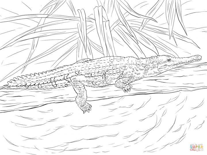 krokodil ausmalbilder ausdrucken  kinderbilderdownload