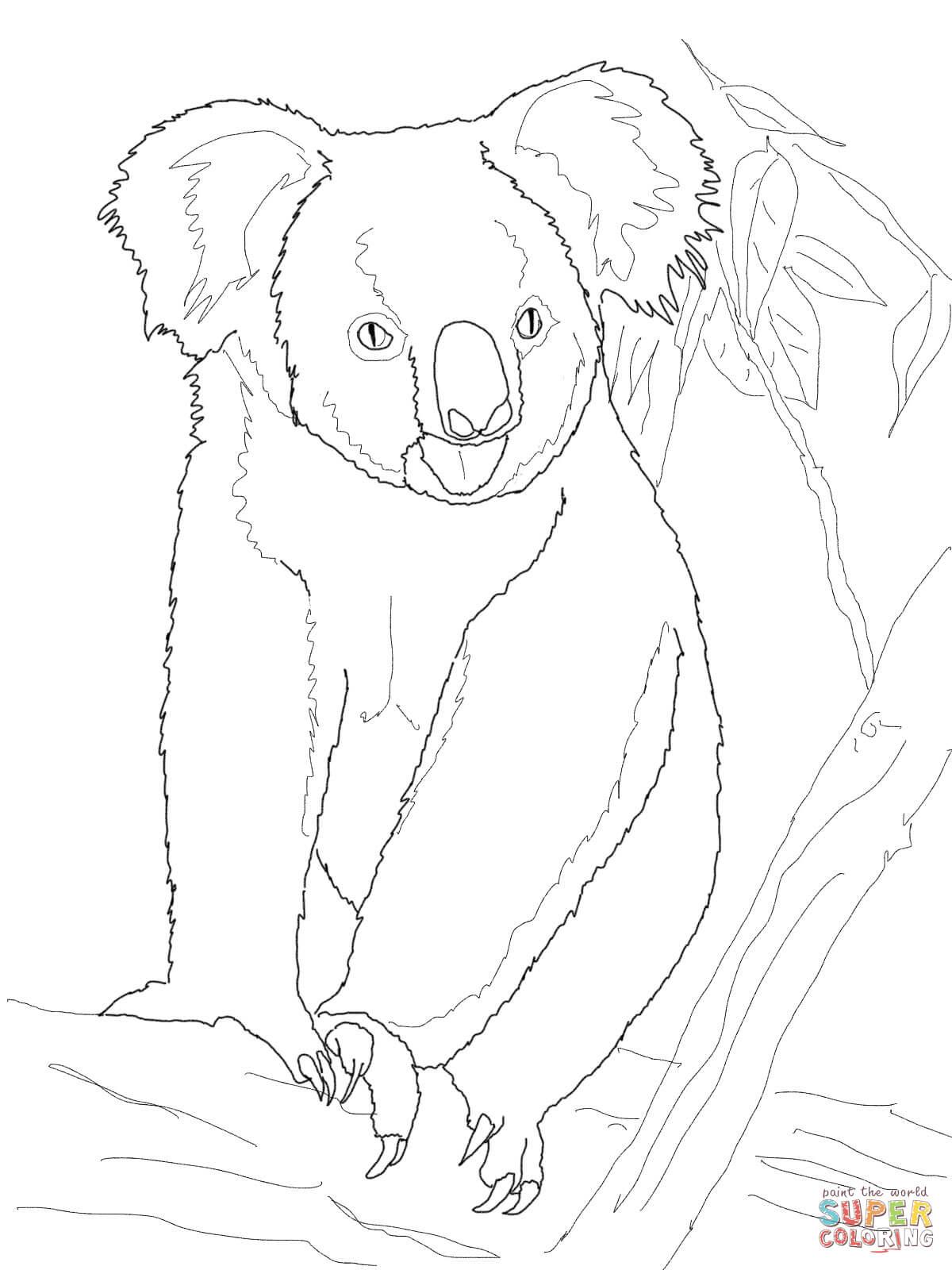 Ausmalbild: Koala Auf Einem Baum | Ausmalbilder Kostenlos ganzes Koala Ausmalbild