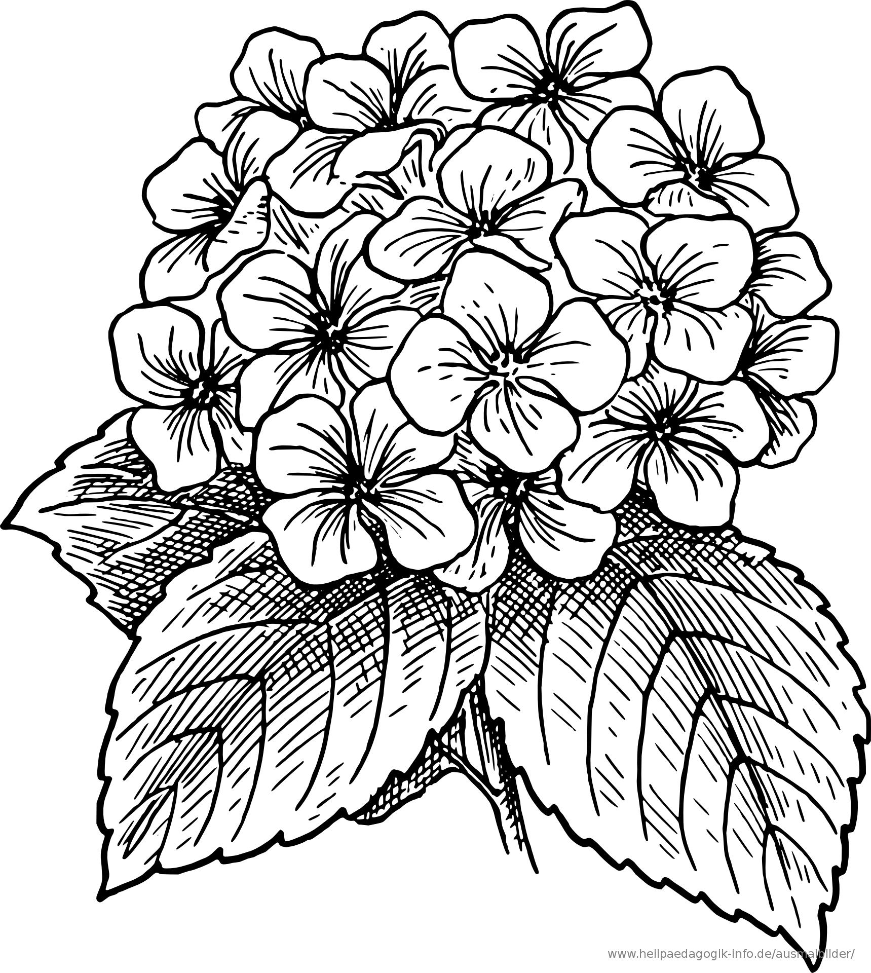 Ausmalbild-Malvorlage--Blumenstrauss--571 bestimmt für Blumenbilder Zum Ausmalen