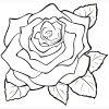 Ausmalbild: Rosen   Ausmalbilder Kostenlos Zum Ausdrucken über Rose Ausmalbild