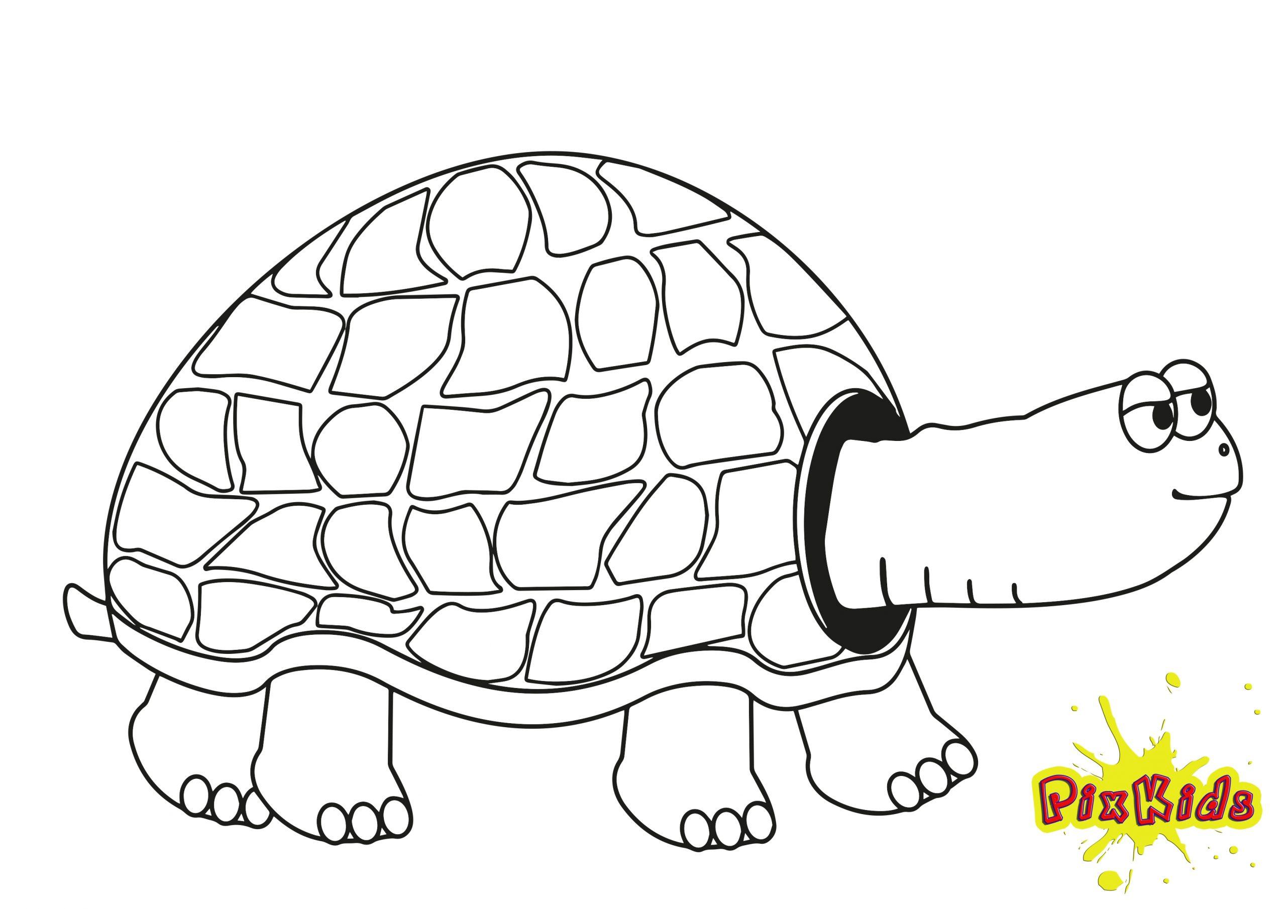 Ausmalbild Schildkröte - Kostenlose Malvorlagen ganzes Schildkröte Ausmalbild