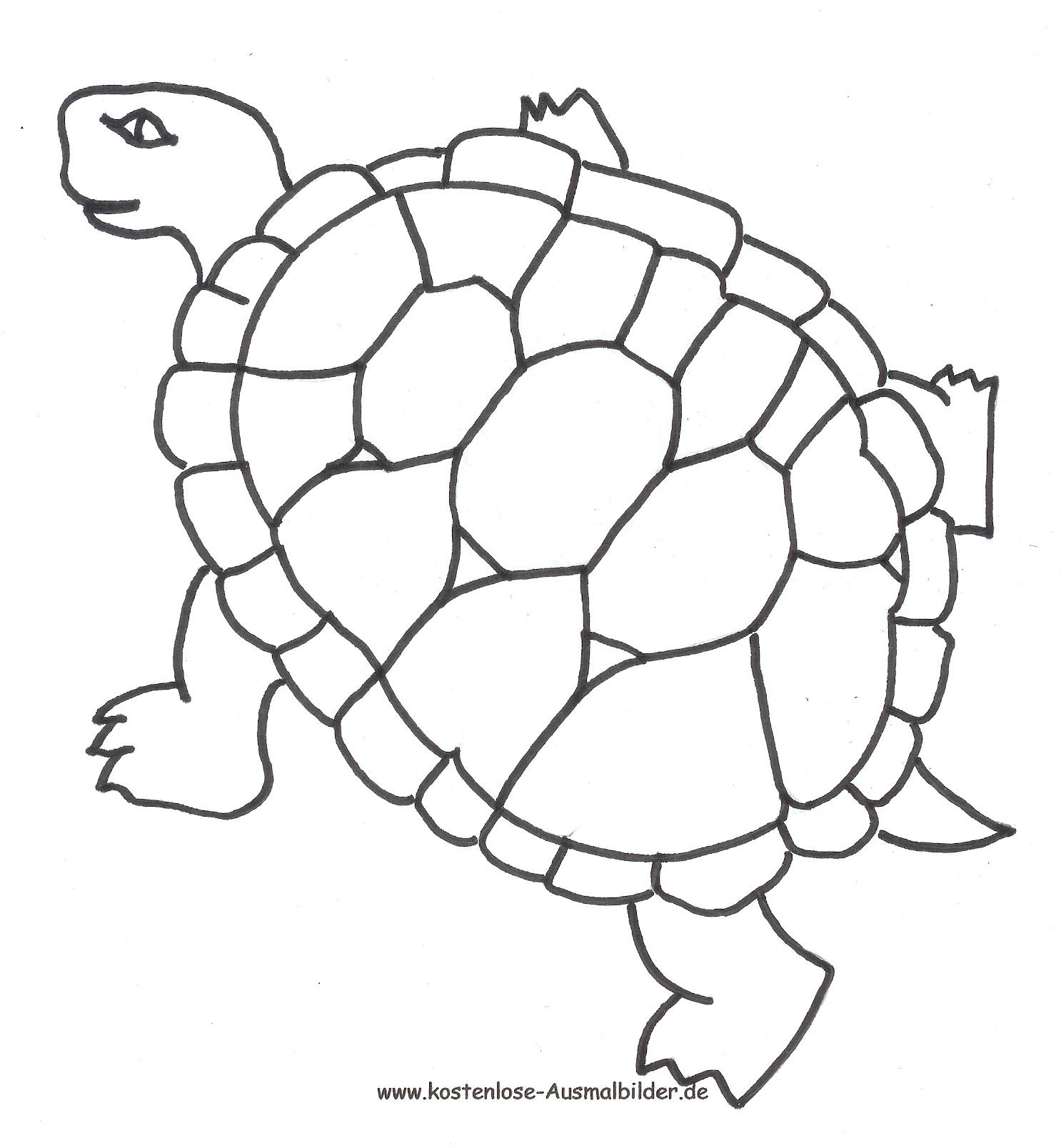 Ausmalbild Schildkröte Zum Ausdrucken innen Schildkröte Ausmalbild