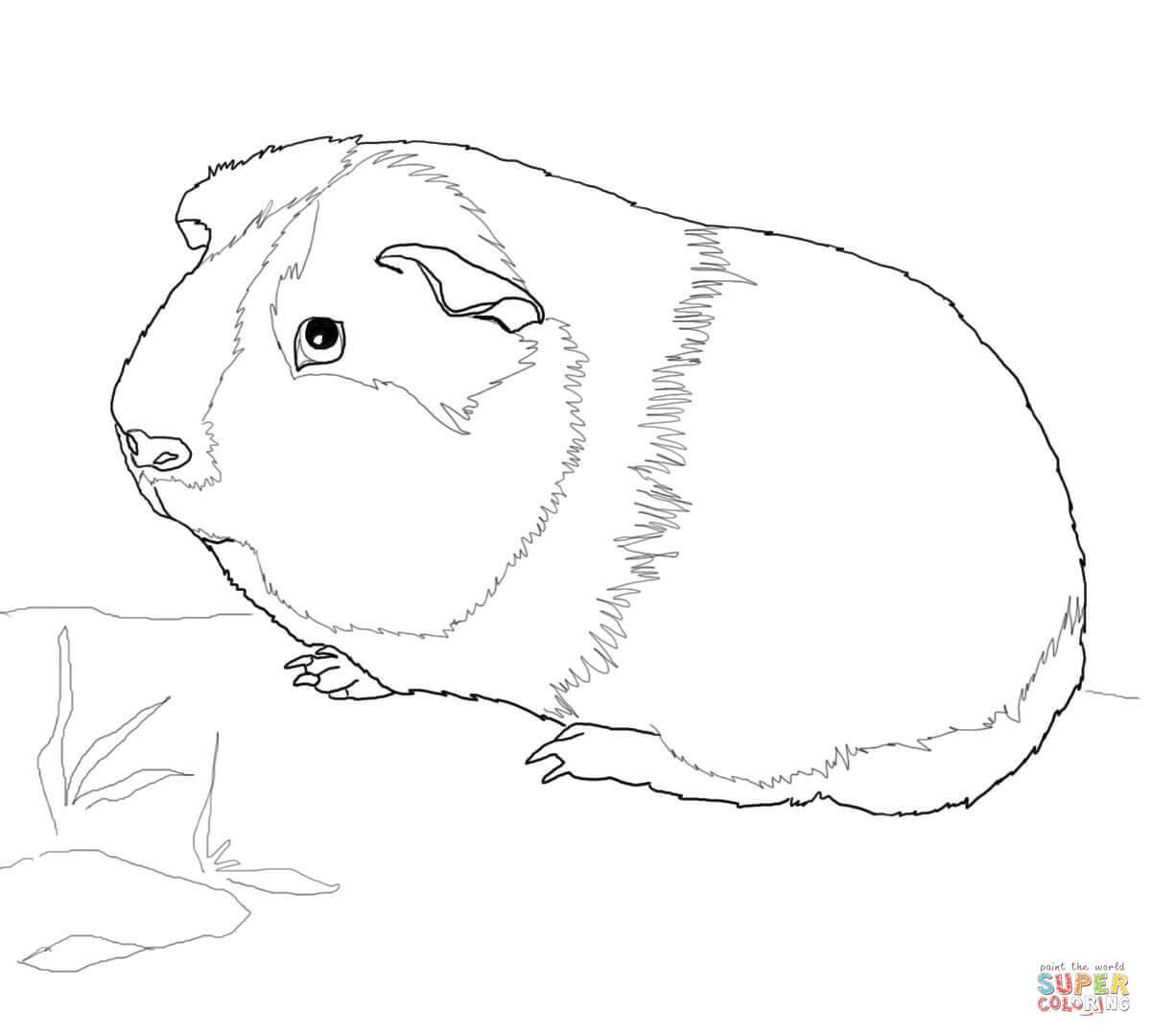 Ausmalbild: Süßes Meerschweinchen   Ausmalbilder Kostenlos mit Ausmalbild Meerschweinchen
