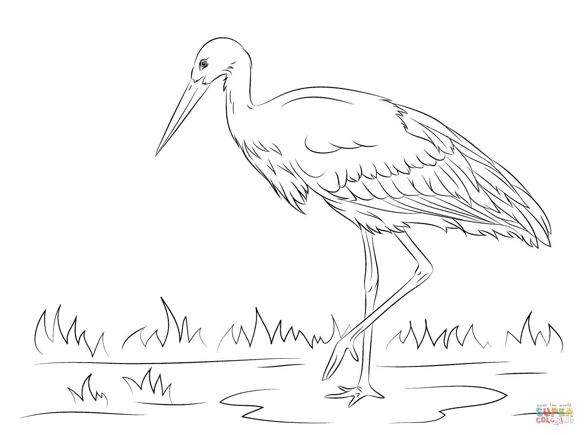 Ausmalbild: Weißstorch | Ausmalbilder Kostenlos Zum Ausdrucken über Storch Zum Ausmalen