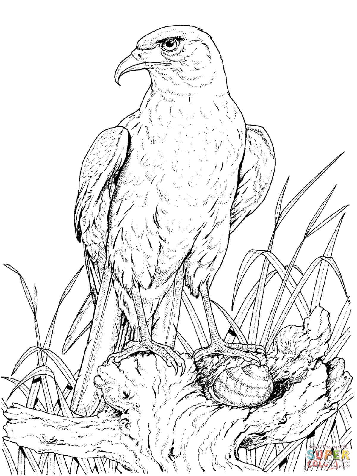 Ausmalbilder Adler - Malvorlagen Kostenlos Zum Ausdrucken über Ausmalbilder Adler