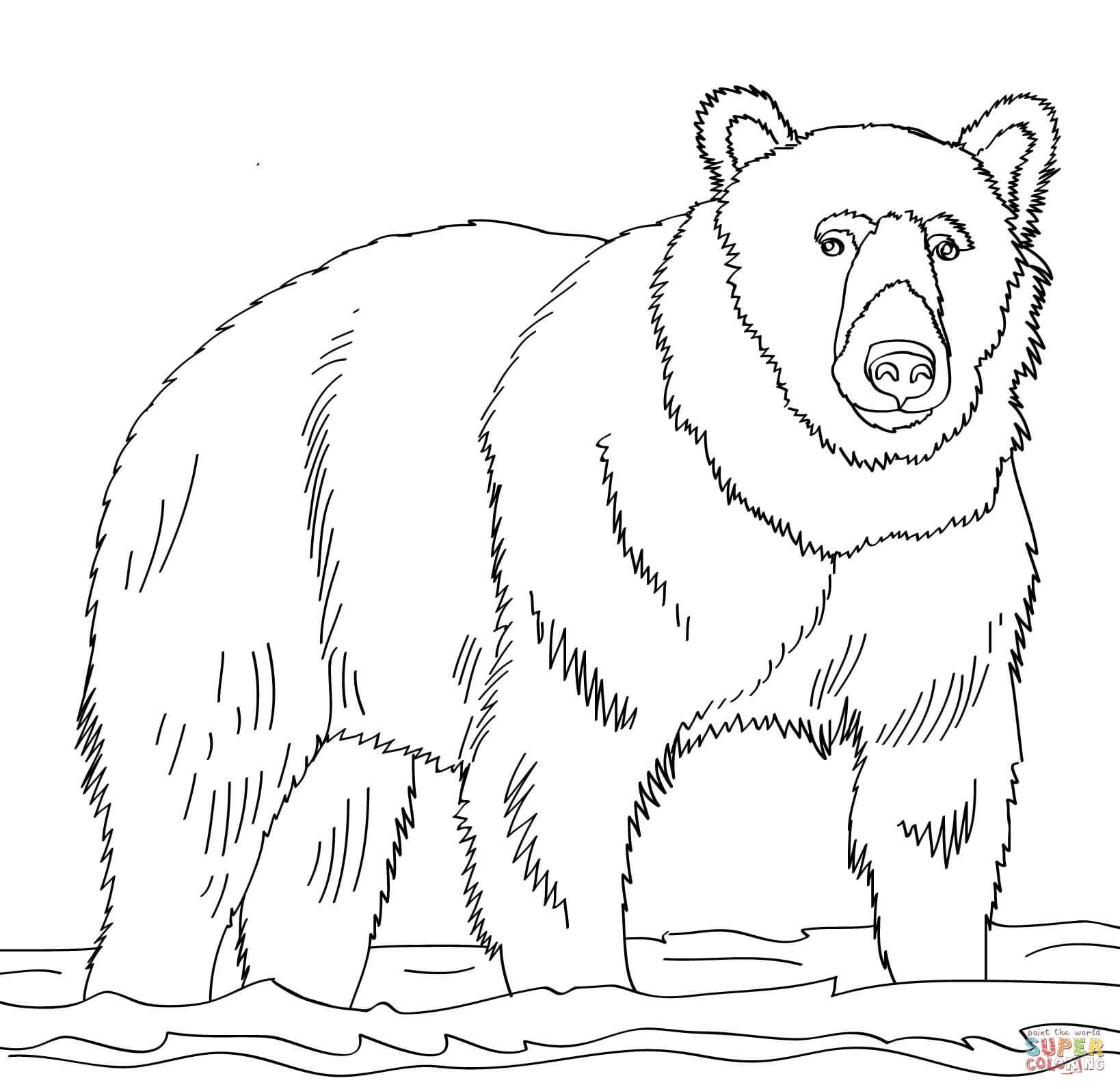 Ausmalbilder Bären - Malvorlagen Kostenlos Zum Ausdrucken bei Bären Bilder Zum Ausdrucken