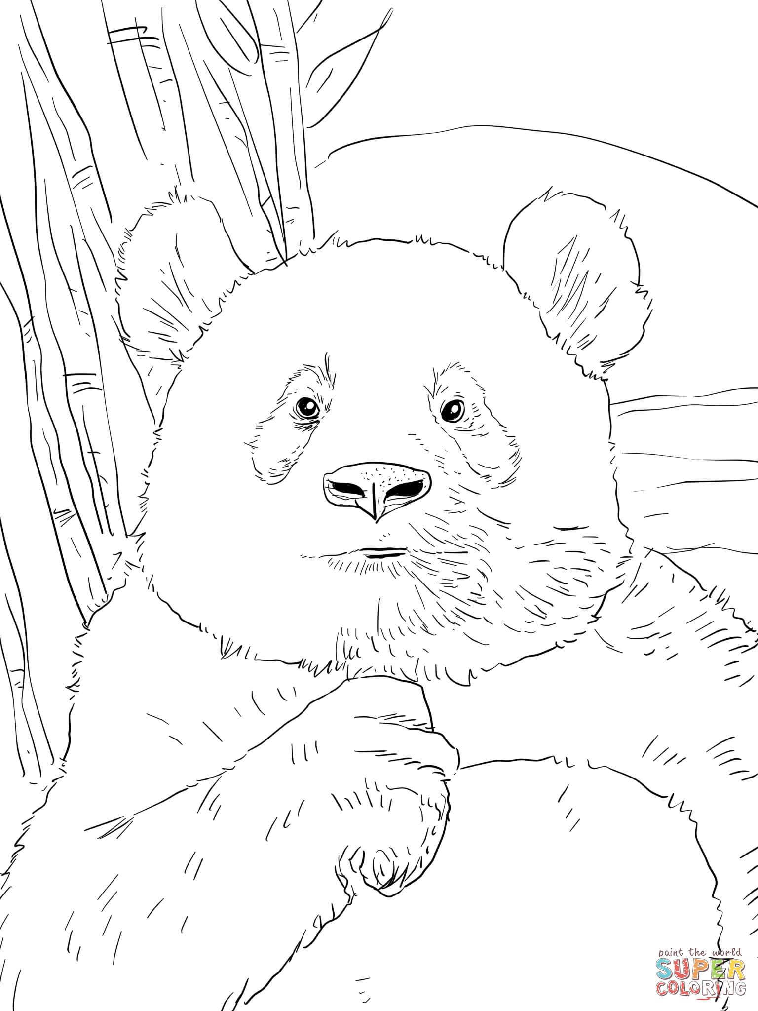 Ausmalbilder Bären - Malvorlagen Kostenlos Zum Ausdrucken mit Bären Bilder Zum Ausdrucken