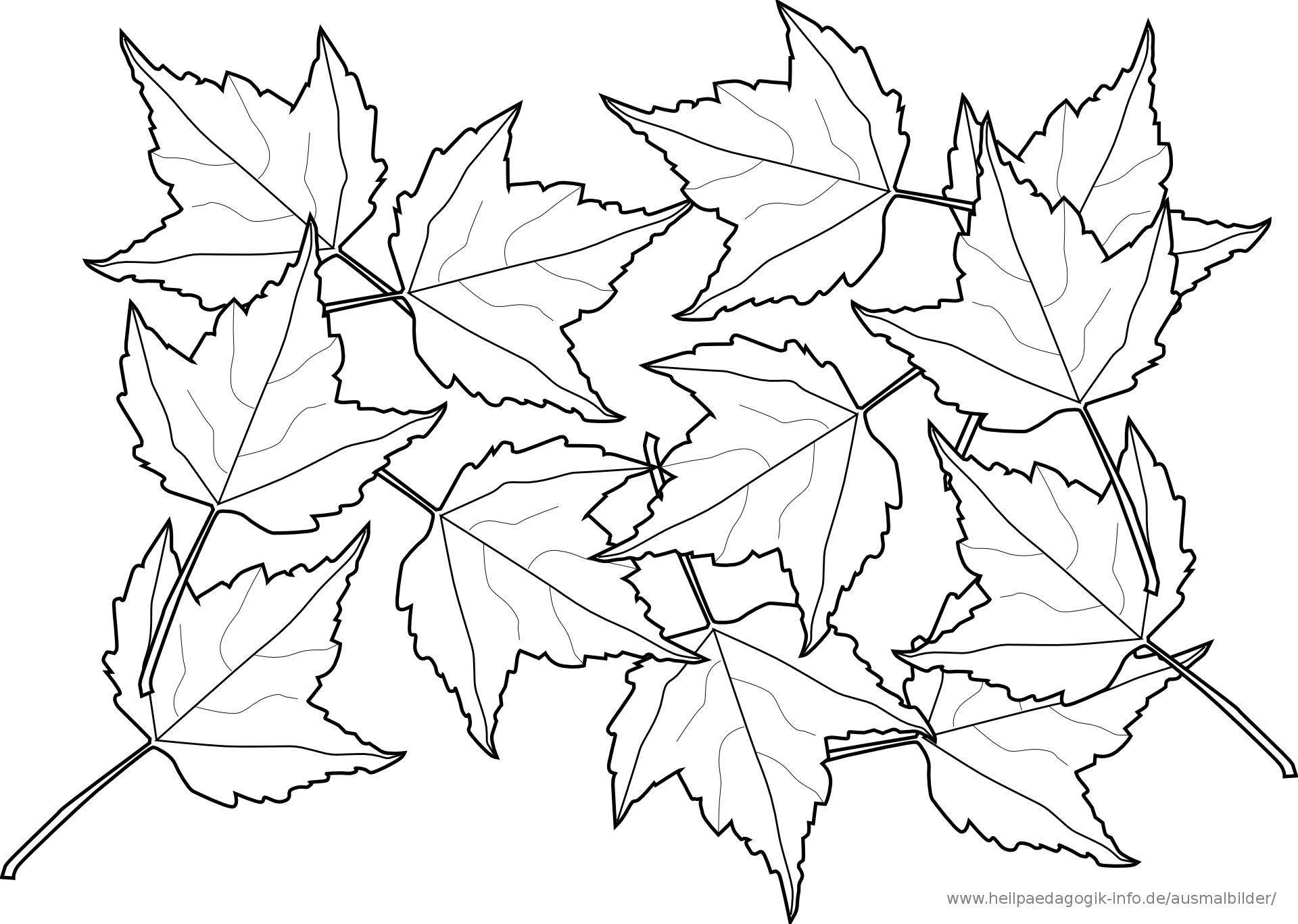 Ausmalbilder Blätter 05 | Blumen Ausmalen, Ausmalbilder bei Ausmalbilder Blätter