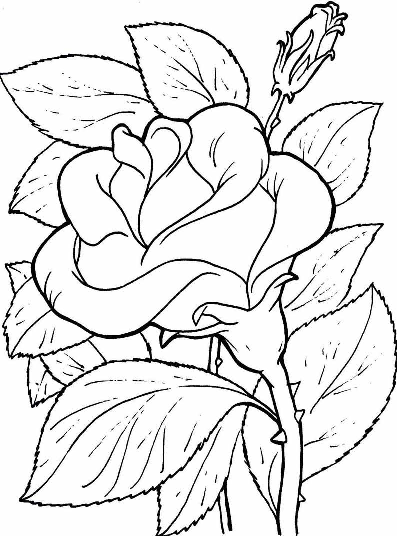 Ausmalbilder Blumen 12 | Ausmalbilder bestimmt für Blumen Ausmalbilder Gratis