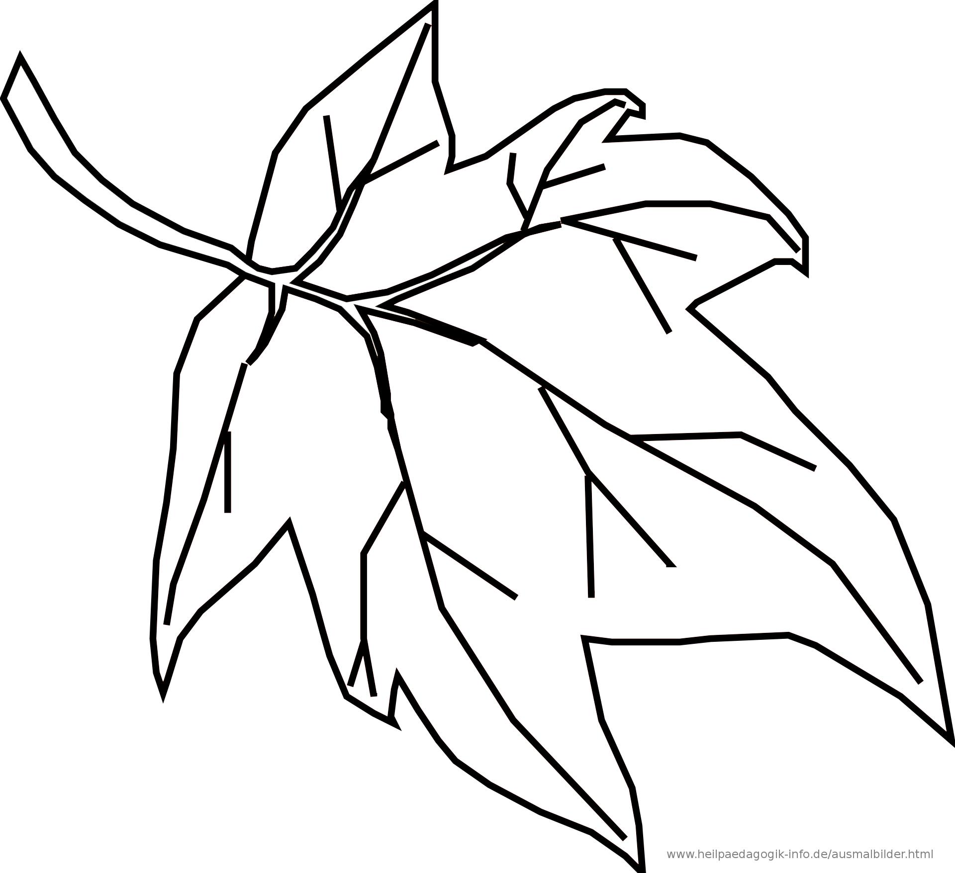 Ausmalbilder Blumen, Bäume, Blätter verwandt mit Ausmalbilder Blätter