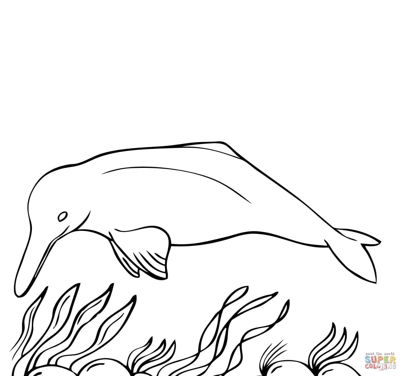 Ausmalbilder Delfine - Malvorlagen Kostenlos Zum Ausdrucken mit Delfin Ausmalbild