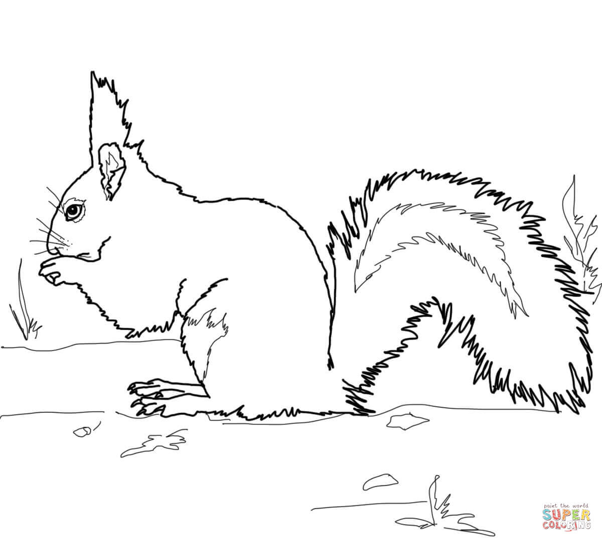 eichhörnchen malvorlage  kinderbilderdownload