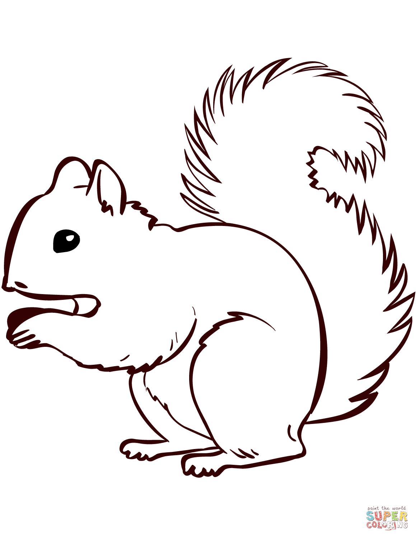 eichhörnchen malvorlage - kinderbilder.download