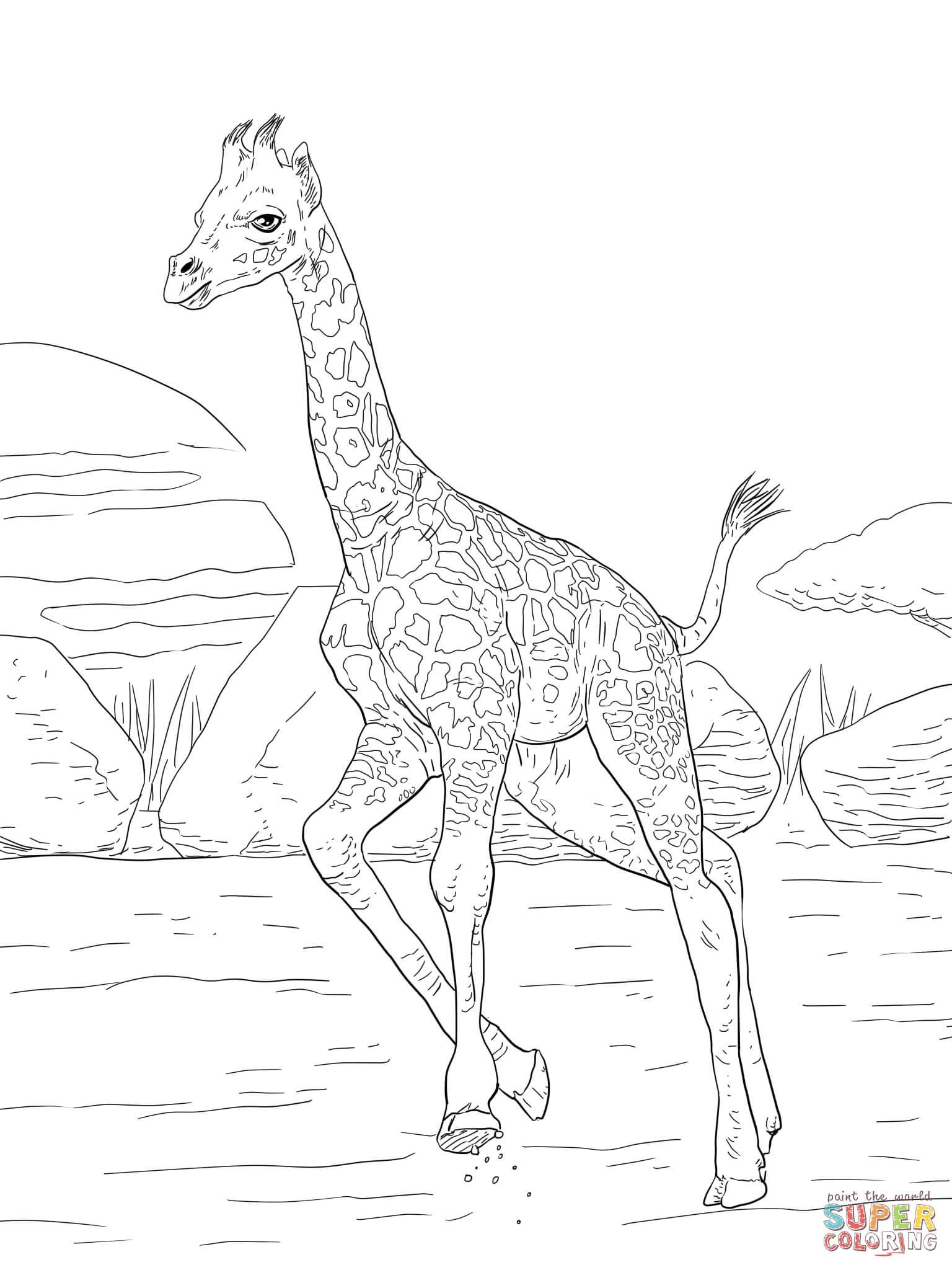 giraffe ausmalbild  kinderbilderdownload  kinderbilder