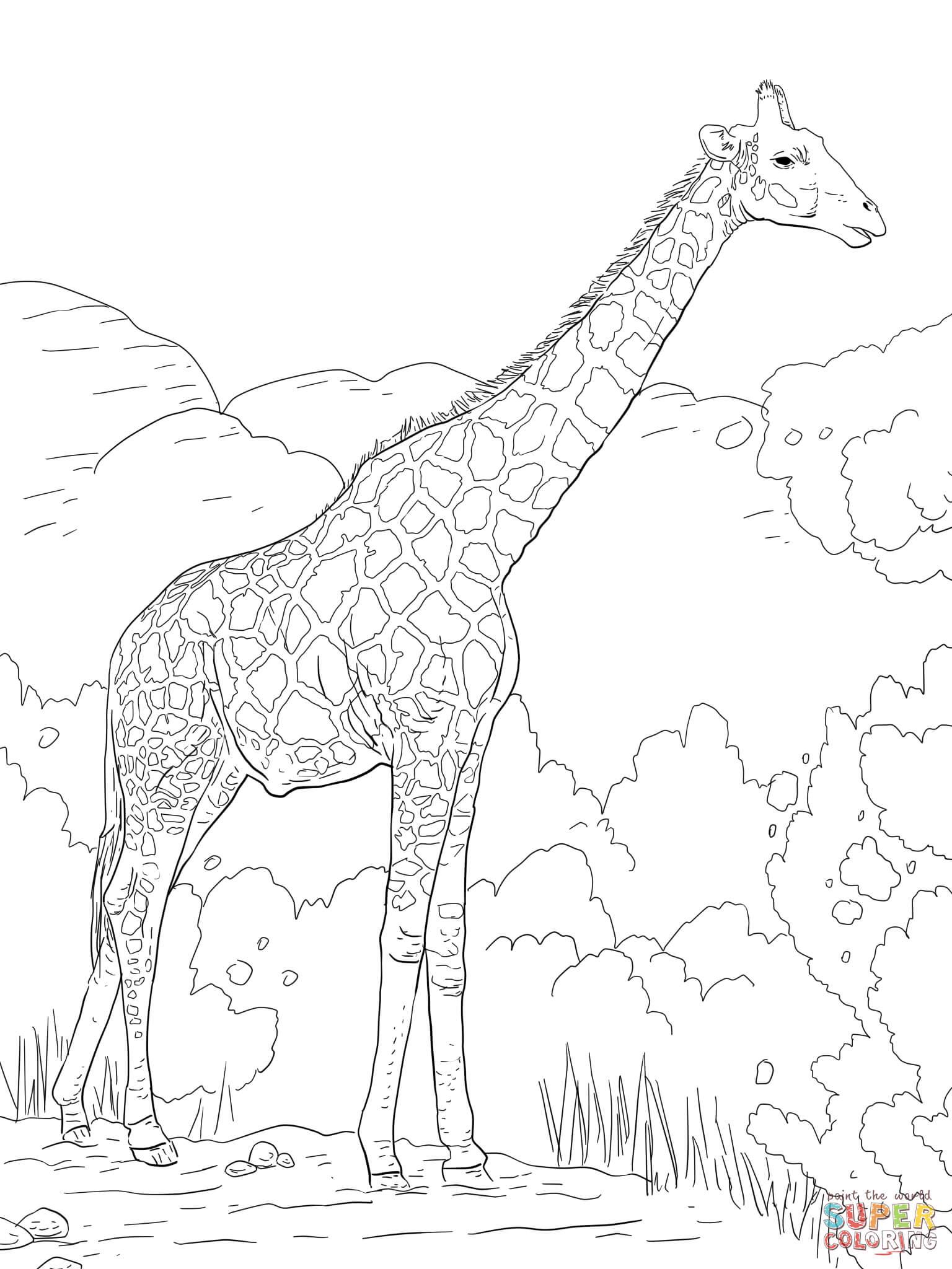 Ausmalbilder Giraffen - Malvorlagen Kostenlos Zum Ausdrucken verwandt mit Giraffe Ausmalbild