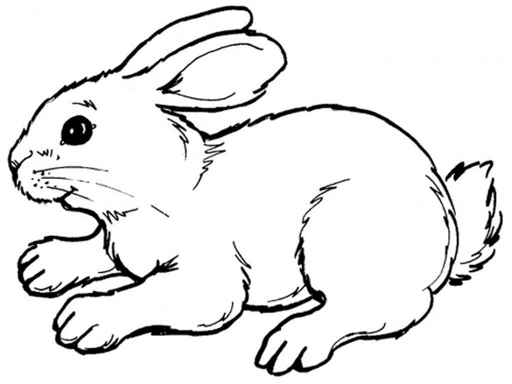 Ausmalbilder Hasen Zum Ausdrucken   Ausmalbilder Tiere in Ausmalbilder Hasen