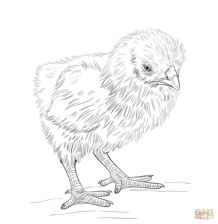Ausmalbilder Hühner - Malvorlagen Kostenlos Zum Ausdrucken bestimmt für Hühner Ausmalbilder