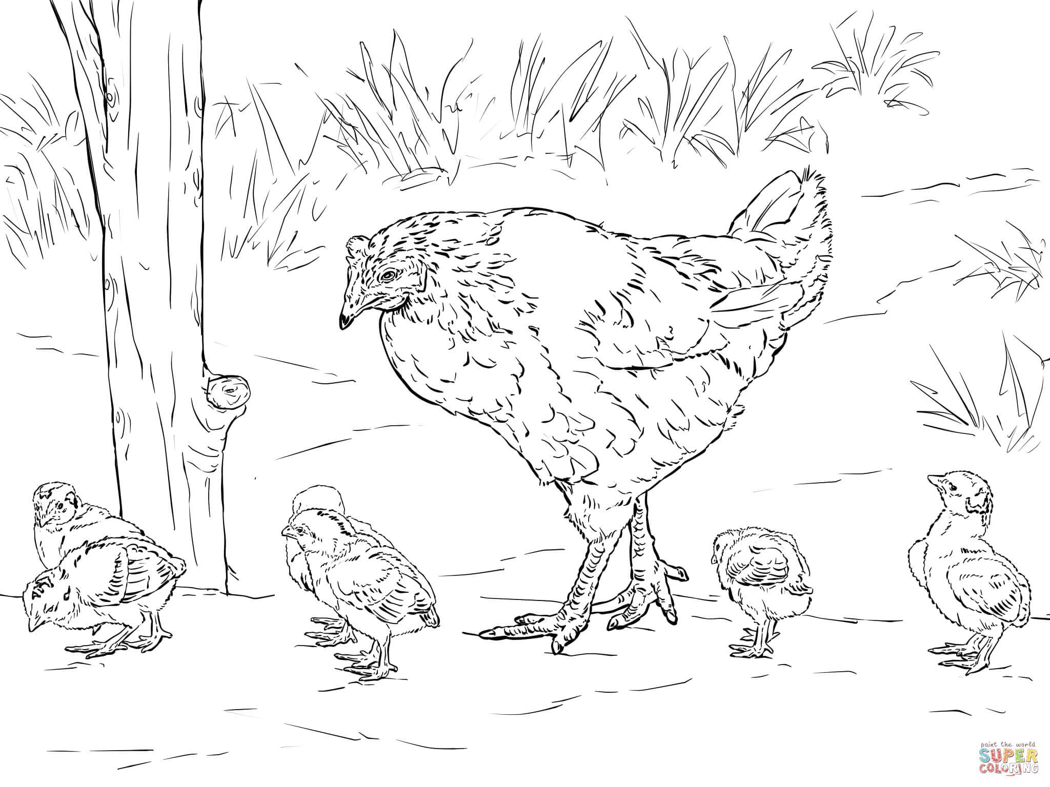 Ausmalbilder Hühner - Malvorlagen Kostenlos Zum Ausdrucken in Hühner Ausmalbilder