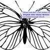 Ausmalbilder Käfer, Schmetterlinge, Insekten ganzes Schmetterling Malvorlagen