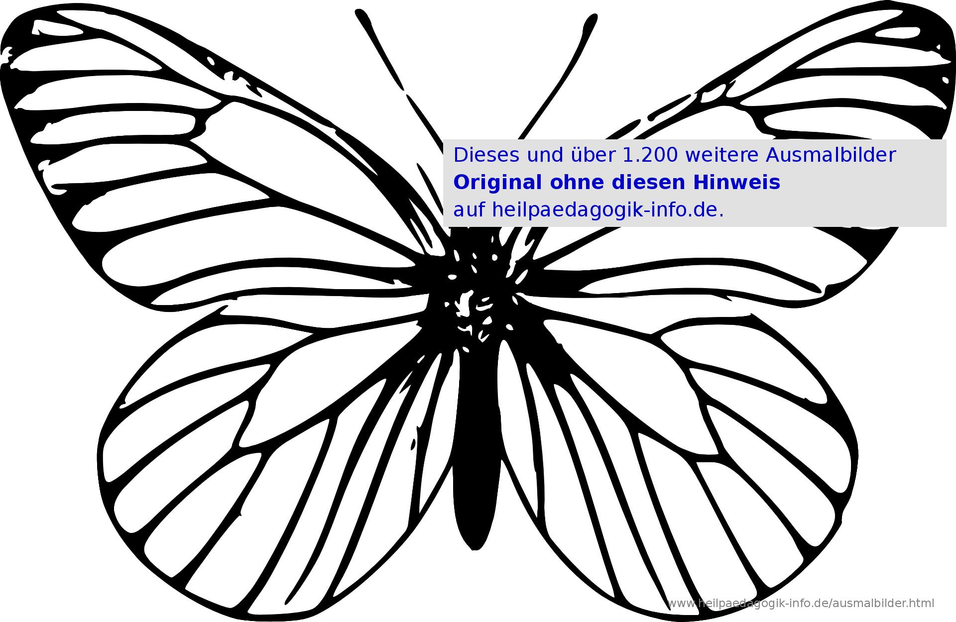 Ausmalbilder Käfer, Schmetterlinge, Insekten in Kostenlose Malvorlage Schmetterling