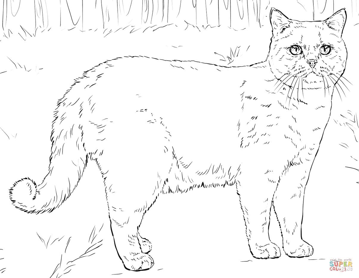 Ausmalbilder Katzen - Malvorlagen Kostenlos Zum Ausdrucken in Ausmalbilder Katzen Kostenlos