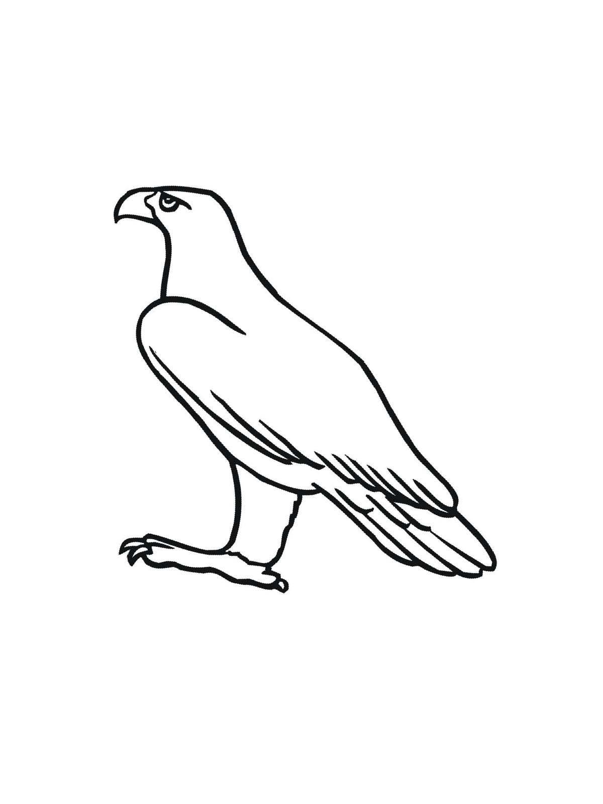 Ausmalbilder, Malvorlagen Von Adler Kostenlos Zum Ausdrucken ganzes Adler Bilder Zum Ausdrucken