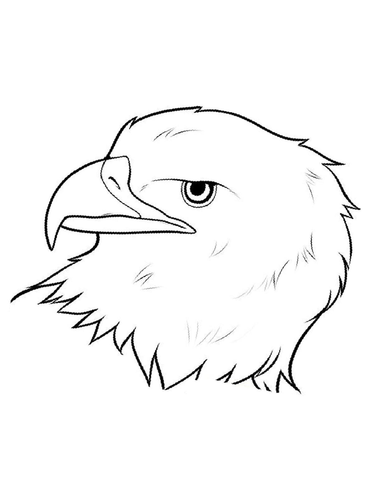 Ausmalbilder, Malvorlagen Von Adler Kostenlos Zum Ausdrucken über Adler Bilder Zum Ausdrucken