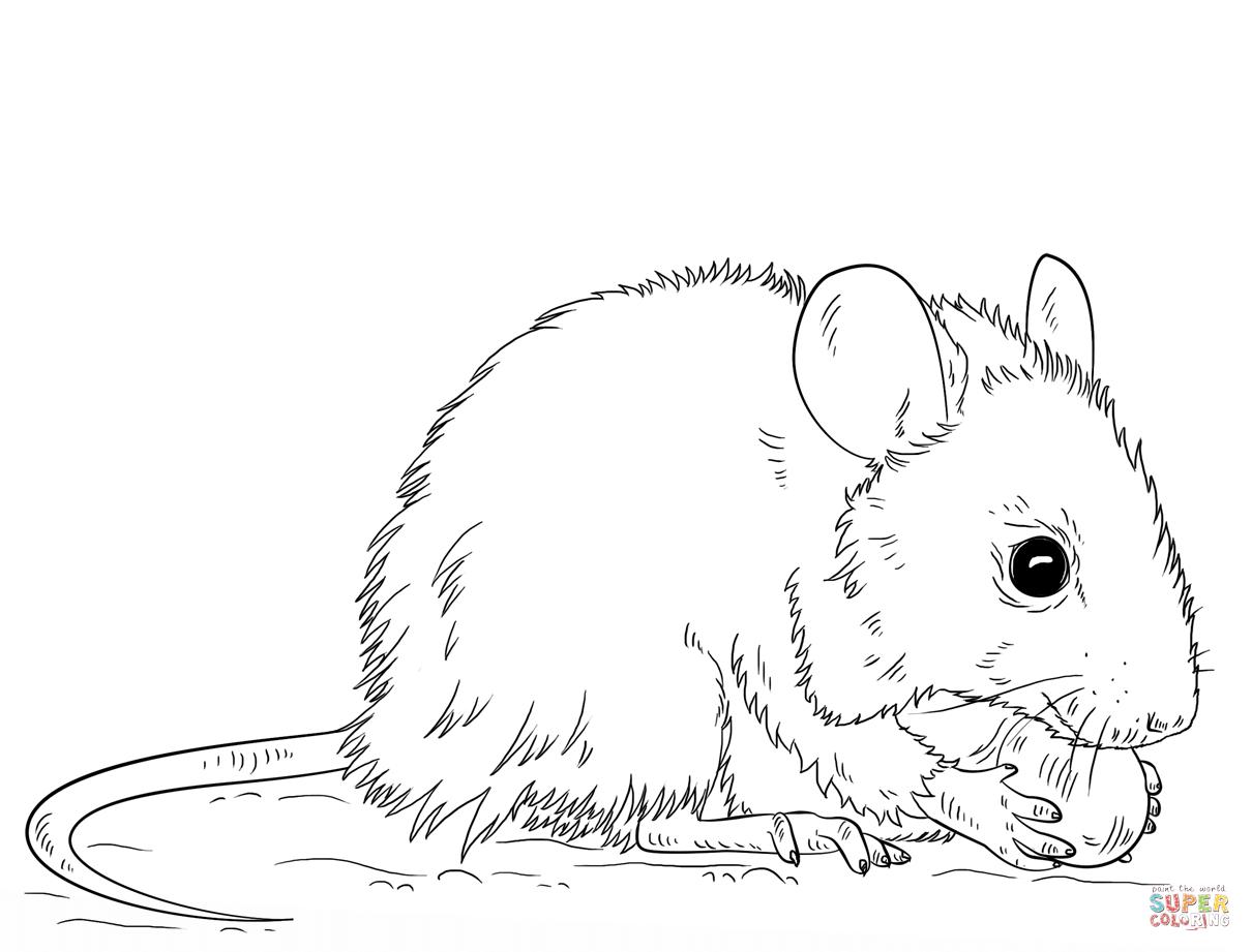 Ausmalbilder Mäuse - Malvorlagen Kostenlos Zum Ausdrucken für Maus Zum Ausmalen