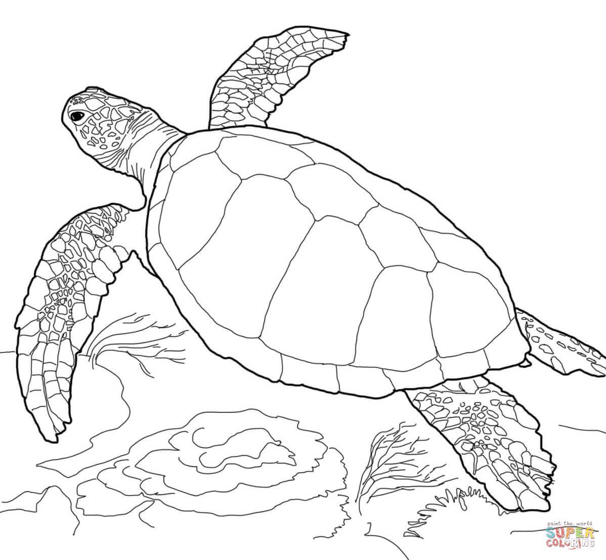 malvorlage schildkröte  kinderbilderdownload